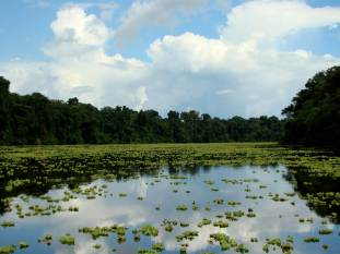 Floating Vegetation in the Amazon