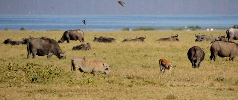 african wildlife spectacle
