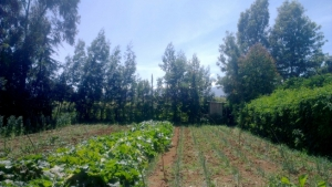 mount kenya farm