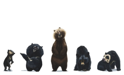 bears 123456